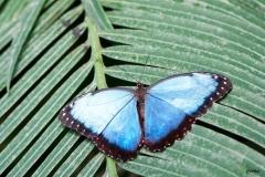 Papillorama (35)_1