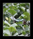 Papillorama (39)_1