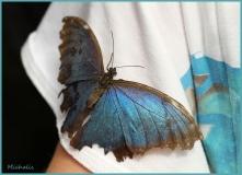 Papillorama (56)_1
