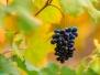 Sortie - Vigne