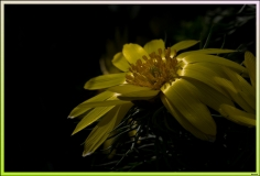 GiBe-2014-04_5D3_5208_GF_GF