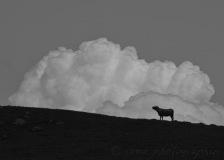 SEMA_silhouettes_contrejour_2
