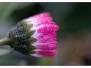 Vergers en fleurs